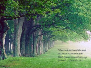 1 Chronicles 16:33 – Faith Trees Wallpaper