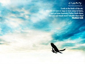 Matthew 6:26 – The Birds of The Air Papel de Parede Imagem