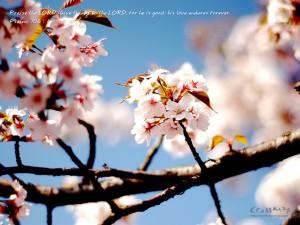 Psalm 106:1 – His Love Endures Forever Wallpaper