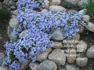 Luke 8:50 – Don't be Afraid Wallpaper