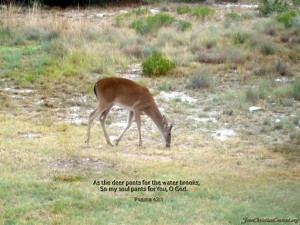 Psalms 42:1 – Deer Wallpaper