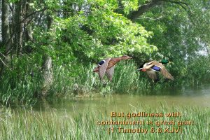 1 timothy 6:6 – Contentment Wallpaper