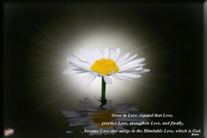 Christian Quotes: Love of God Wallpaper