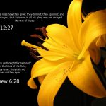 Luke 12:27 and Matthew 6:28 – No Worries Wallpaper Christian Background