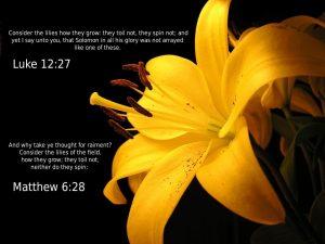 Luke 12:27 and Matthew 6:28 – No Worries Wallpaper