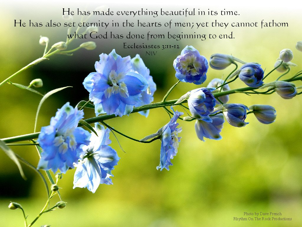 Ecclesiastes 3:11-12 -Creator of Everything Beautiful christian wallpaper free download. Use on PC, Mac, Android, iPhone or any device you like.