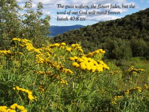 Isaiah 40:8 – Endures Forever Wallpaper