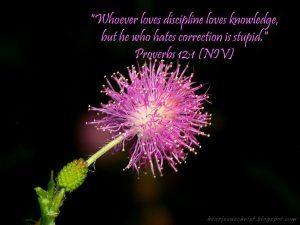 Proverbs 12:1 – Discipline Wallpaper