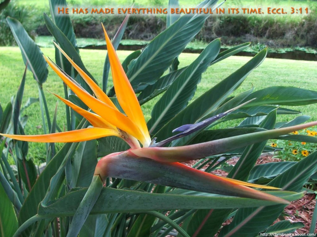 Ecclesiastes 3:11 – Everything is Beautiful christian wallpaper free download. Use on PC, Mac, Android, iPhone or any device you like.