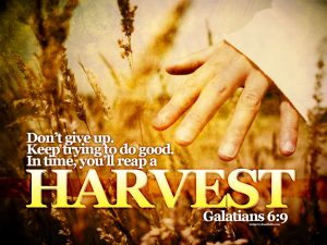 Galatians 6:9 – Do Good Wallpaper
