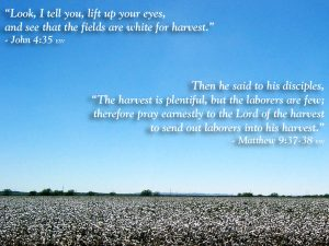 John 4:35 and Matthew 9:37-38 – God Bless His Disciples Wallpaper