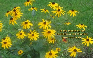 Proverbs 14:3 – Lips of the Wise Wallpaper