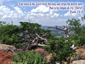Psalm 29:9 – The Voice Of The LORD Wallpaper