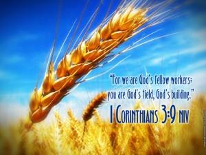 1 Corinthians 3:9 – God's Fellow Workers Wallpaper