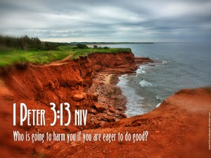 1 Peter 3:13 – No Harm Wallpaper