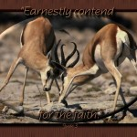 Christian Photography: Deers Fighting Wallpaper Christian Background