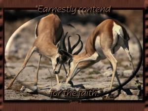 Christian Photography: Deers Fighting Wallpaper