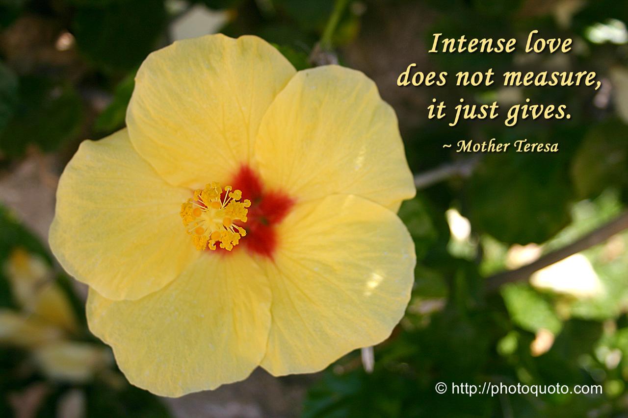 Christian Quote: Mother Teresa – Intense Love Papel de Parede Imagem