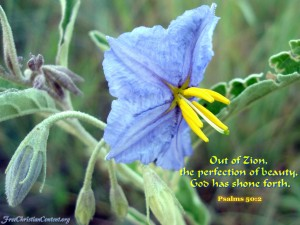 Psalm 50:2 – The Perfection of Beauty Wallpaper
