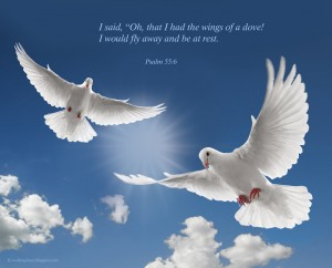 Psalm 55:6 – Like A Dove Wallpaper