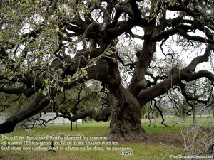 Psalm 1:3 – Like a Tree Wallpaper