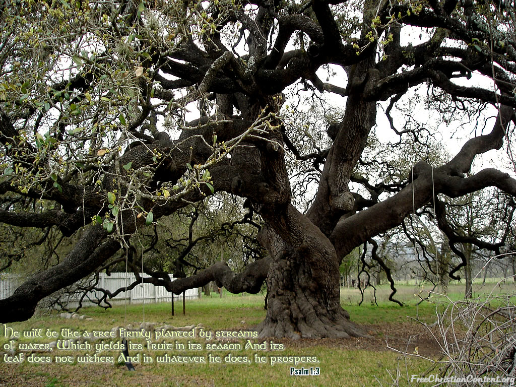 Psalm 1:3 – Like a Tree christian wallpaper free download. Use on PC, Mac, Android, iPhone or any device you like.
