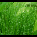 Psalm 103:15-17 – Life of Mortals Wallpaper Christian Background