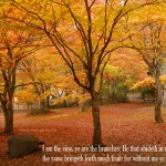 John 15:5 – Vine and Branches Wallpaper Christian Background