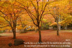 John 15:5 – Vine and Branches Wallpaper