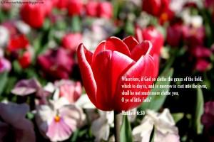 Matthew 6:30 – Faith in God Wallpaper