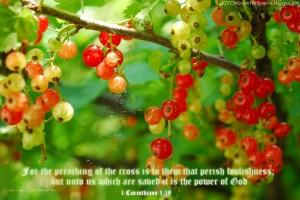 1 Corinthians 1:18 – Message of the Cross Wallpaper