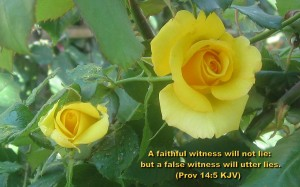 Proverbs 14:5 – Truthful Witness Wallpaper