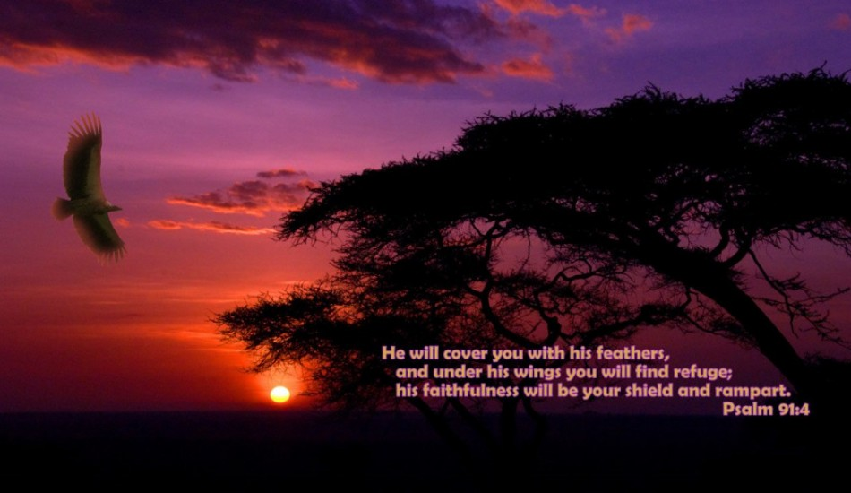 Psalm 91:4 – Faithfulness christian wallpaper free download. Use on PC, Mac, Android, iPhone or any device you like.