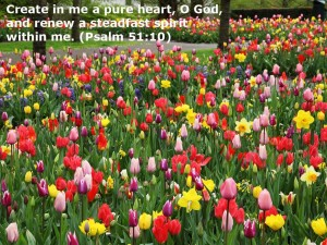 Psalm 51:10 – A Pure Heart Wallpaper