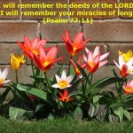 Psalm 77:11 – Deeds of the Lord Wallpaper Christian Background
