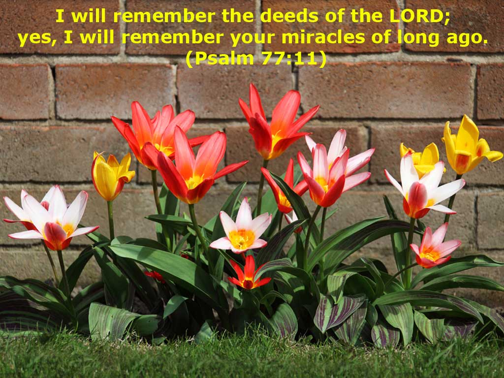 Psalm 77:11 – Deeds of the Lord christian wallpaper free download. Use on PC, Mac, Android, iPhone or any device you like.