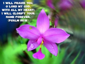 Psalm 86:12 – I will praise you Wallpaper