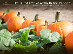 Galatians 6:9 – Let us not become weary Wallpaper