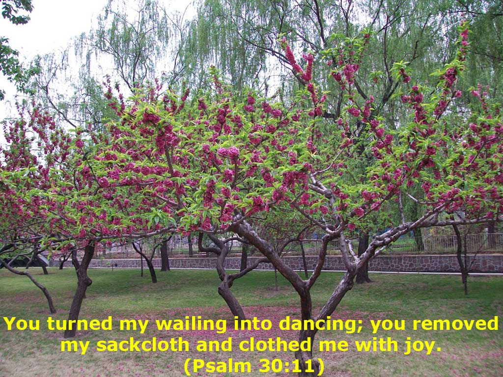 Psalm 30:11 – Clothed with Joy christian wallpaper free download. Use on PC, Mac, Android, iPhone or any device you like.