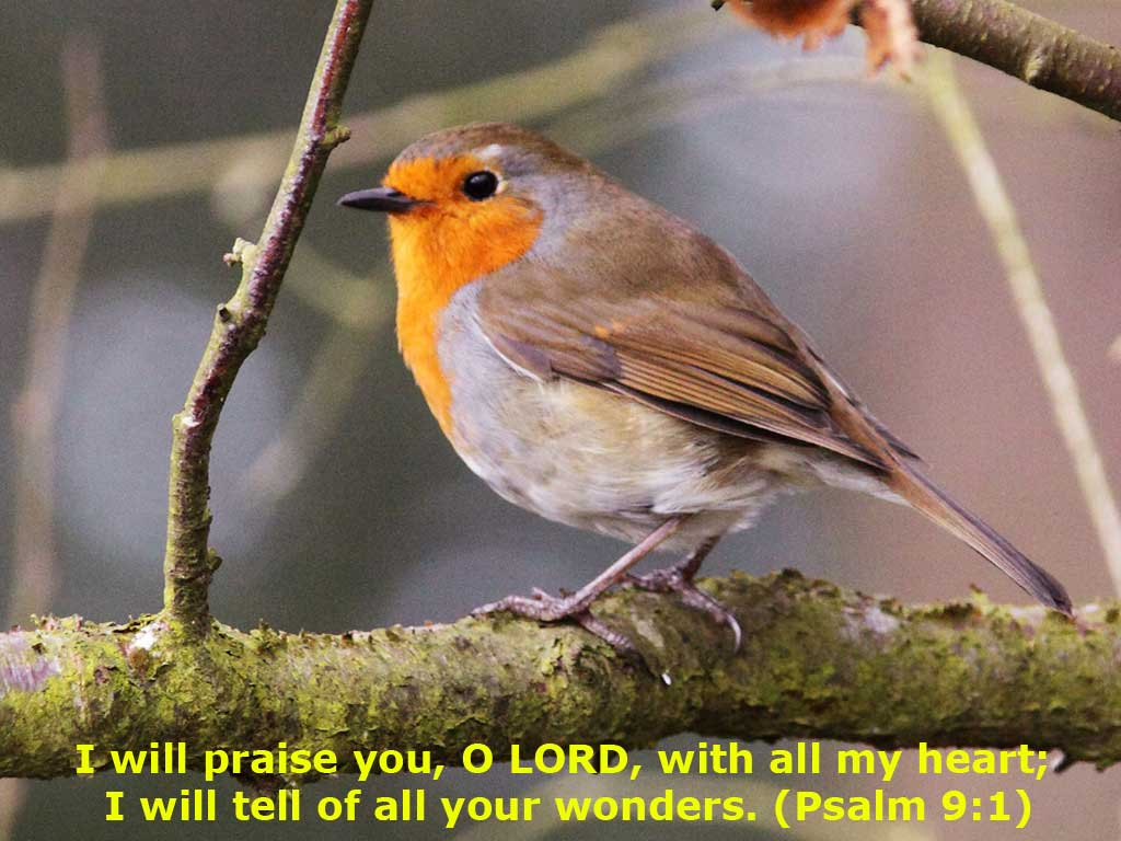 Psalm 9:1 – Praise with all your heart christian wallpaper free download. Use on PC, Mac, Android, iPhone or any device you like.