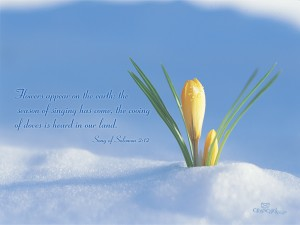 Song of Solomon 2:12 – Season of Singing Wallpaper