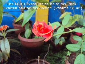 Psalm 18:46 – God my Savior Wallpaper