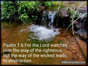Psalm 1:6 – The Lord watches Over Wallpaper
