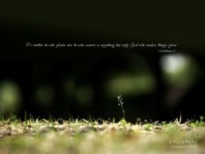 1 Corinthians 3:7 – God makes things grow Wallpaper