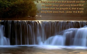 John 15:2 – Fruit Wallpaper