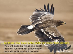 Isaiah 40:31 – Who hope in the Lord Wallpaper