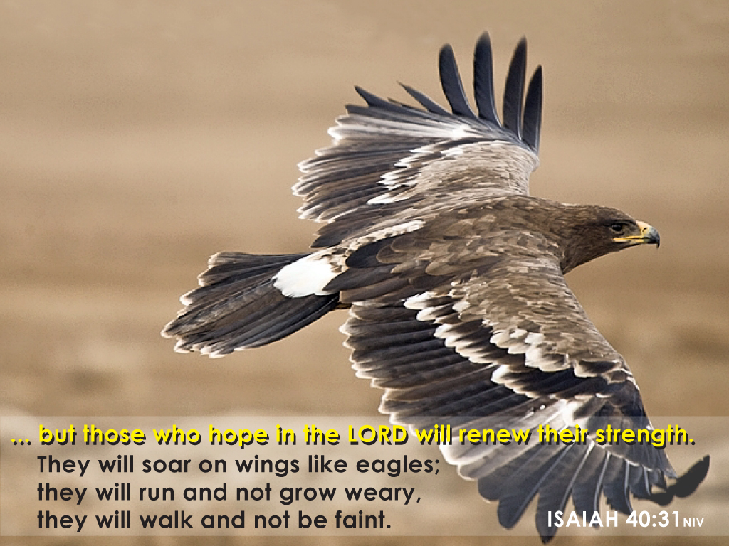 Isaiah 40:31 – Who hope in the Lord christian wallpaper free download. Use on PC, Mac, Android, iPhone or any device you like.
