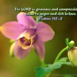 Psalm 145:8 – The Lord is gracious Wallpaper Christian Background
