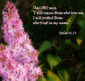 Psalm 91:14 – Trust Wallpaper