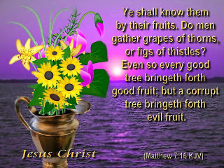 Matthew 7:16 – Good Tree christian wallpaper free download. Use on PC, Mac, Android, iPhone or any device you like.